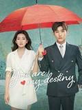 CHH1179 : ซีรี่ส์จีน You Are My Destiny พรหมลิขิตนี้คือเธอ (ซับไทย) DVD 6 แผ่น