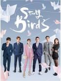 CHH1441 : Stray Birds อลวนคนไอที (2021) (ซับไทย) DVD 7 แผ่น