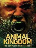 se1832 : ซีรีย์ฝรั่ง Animal Kingdom Season 3 [ซับไทย] DVD 3 แผ่น