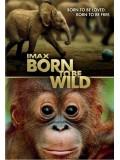 ft097 : สารคดี IMAX: Born To Be Wild มหัศจรรย์ชีวิตป่า  DVD Master 1 แผ่นจบ